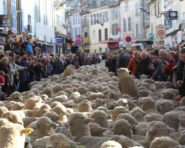 Fête des bergers et des traditions